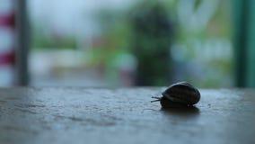 Regards d'escargot hors de Shell banque de vidéos