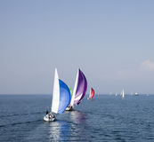 Regatta 2 Royalty Free Stock Photo