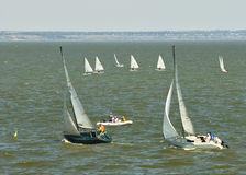 Regatta Royalty Free Stock Photography