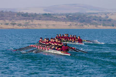 Regatta Eights Oct Rowing Racing Royalty Free Stock Photos