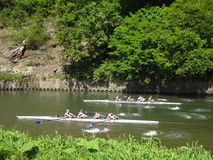 Racing rowers Stock Images
