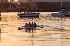 Regatta Rowing Morning Royalty Free Stock Photos