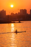 Regatta Rowing Skull Sunrise Colors. Rowing skull male rower silhouetted in  action on harbor waters at sunrise . Durban Rowing Club Head of the Bay Regatta on Royalty Free Stock Images