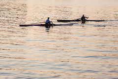 Regatta Rowing Skulls Morning  Stock Photography