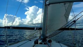 Regatta segling, konkurrens stock video