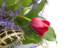 Regeling met bloemtulp. Stock Afbeeldingen