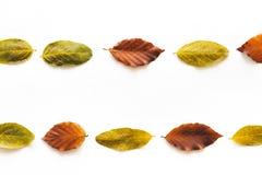 Regeling met kleurrijke de herfstbladeren Stock Afbeelding