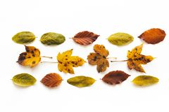 Regeling met kleurrijke de herfstbladeren Royalty-vrije Stock Foto's