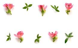 Regeling met Roze Bloemen en Groene Bladeren op Witte Backgrou Stock Fotografie