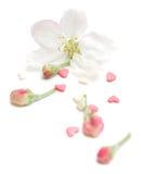 Regeling met roze harten en een knop Royalty-vrije Stock Afbeelding