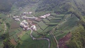 Regeling met Theeaanplanting op Alishan-Bergengebied, Taiwan Lucht Mening stock videobeelden