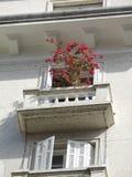 Regeling van donkerrode bloemen Stock Afbeeldingen