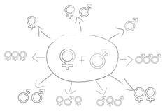 Regeling van geslacht Stock Foto's
