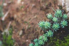 Regeling van succulents of de cactus op aarden achtergrond zoals stock fotografie
