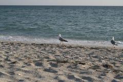 Regelmäßige Begleiter auf der Küste Stockbild