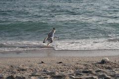 Regelmäßige Begleiter auf der Küste Stockbilder