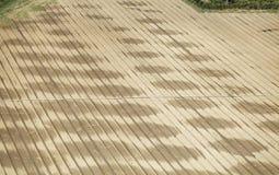 Regelmäßige Furchen des Landes mit langen Rohren für Bewässerung Lizenzfreies Stockbild