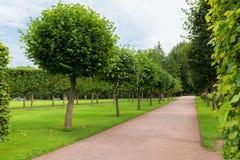 Regelmatig park stock afbeelding