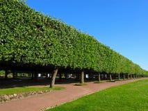 Regelmatig park, steeg Royalty-vrije Stock Foto's