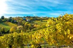 Regelung mit Häusern am Weinberg im Herbst Stockbilder