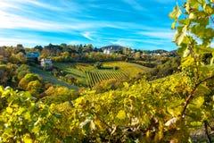 Regelung mit Häusern am Weinberg im Herbst Stockfotografie