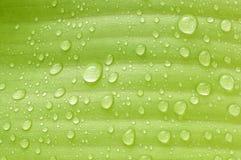 Regen auf Bananenblättern Lizenzfreies Stockbild