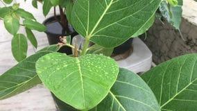 Regen auf Blättern stock footage