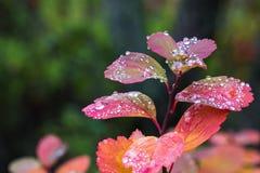 Regen auf Blättern IV Stockfotografie