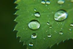 Regen auf Blatt Lizenzfreies Stockfoto