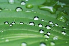 Regen auf Blattauszug Lizenzfreie Stockbilder
