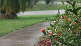 Regen auf dem Bürgersteig stock video footage