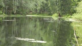 Regen auf dem Teich 4k stock footage