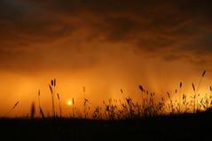 Regen auf der Wiese lizenzfreies stockfoto