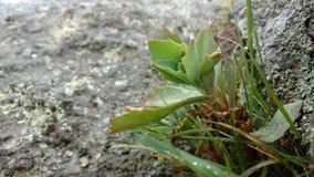 Regen auf Kaktus Stockbild