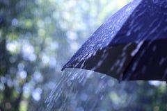 Regen auf Regenschirm Stockfotografie
