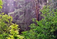 Regen in bos Royalty-vrije Stock Afbeelding