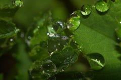 Regen in bos stock fotografie