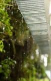 Regen-Bratenfett vom Dach Stockbild