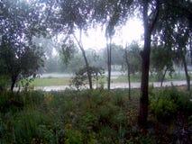 Regen in de zomer stock video