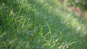 Regen, der auf Gras fällt stock video