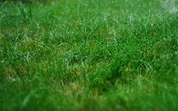 Regen, der auf Gras während eines heißen Sommers Juni duscht Lizenzfreie Stockbilder