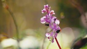 Regen, der auf Marsh Orchid fällt stock video