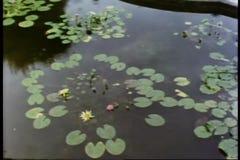 Regen die op waterlelies vallen die op vijver drijven stock videobeelden