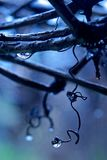 Regen in een wijngaard Stock Afbeeldingen