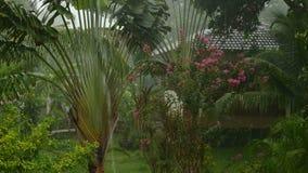 Regen in einem tropischen Garten stock footage