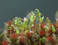 Regen en mosmacro stock afbeelding