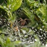 Regen en spinnest stock afbeeldingen
