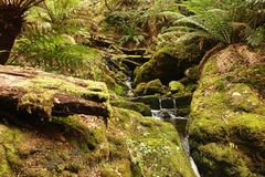 Regen Forest Creek Stock Foto's