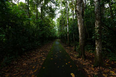 Regen Forest Path Stockbild