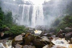 Regen Forest Waterfall Stock Afbeelding